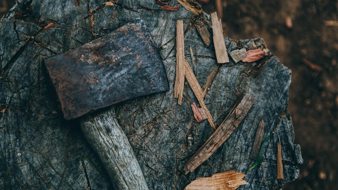 wycinka-drzew-katowice